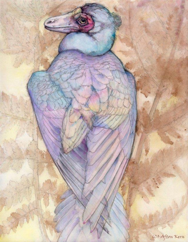 Illustration of Caihong juji by Afton Kern.