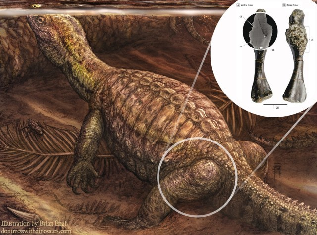 Pappochelys with diseased bone, by Brian Engh