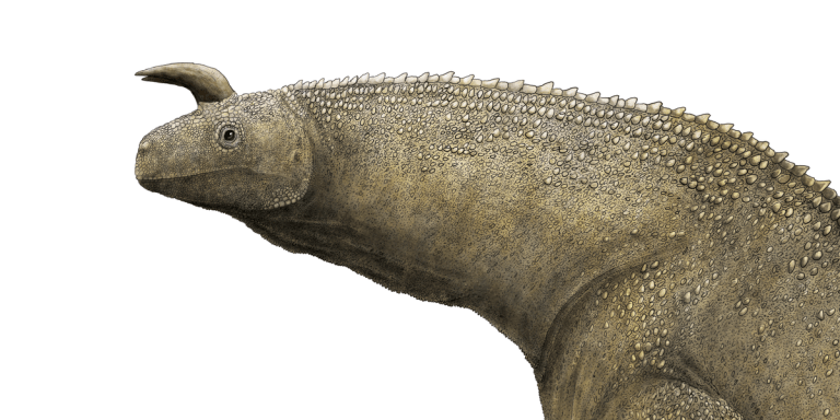 Shringasaurus illustration by Liam Edward: detail of the head