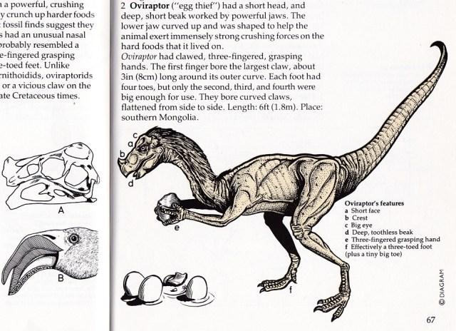 Oviraptor with mane