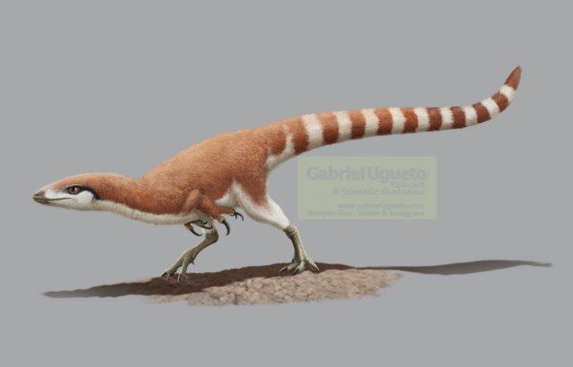 Illustration of the feathered theropod dinosaur Sinosauropteryx by Gabriel Ugueto
