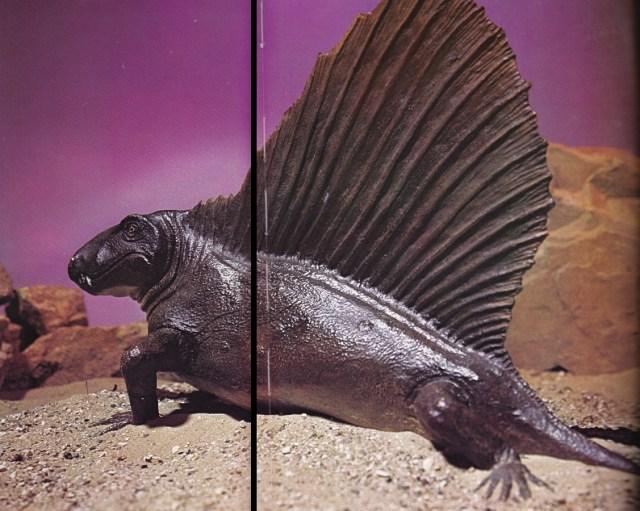 Dimetrodon by BM(NH)