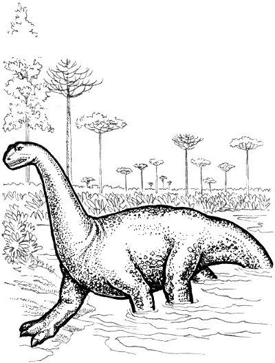 Sauropod line drawing