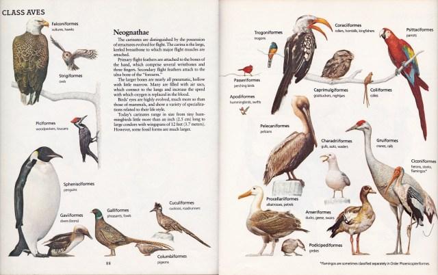 Neognaths by Peter Zallinger