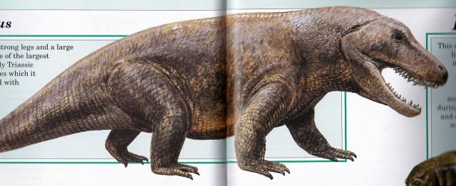 Erythrosuchus by Steve Kirk