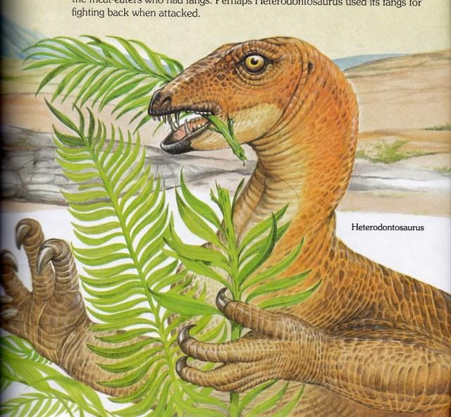 Heterodontosaurus by Christopher Santoro