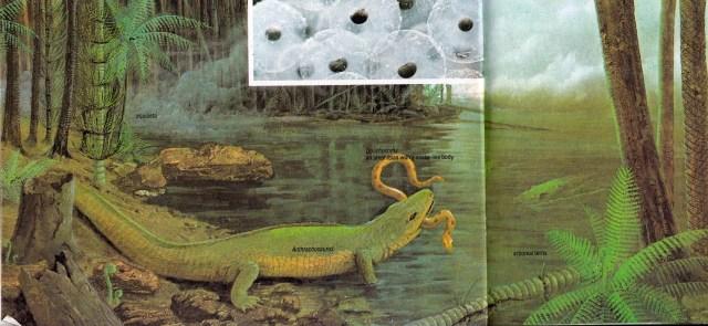 Anthracosaurus by C Di Ciancio