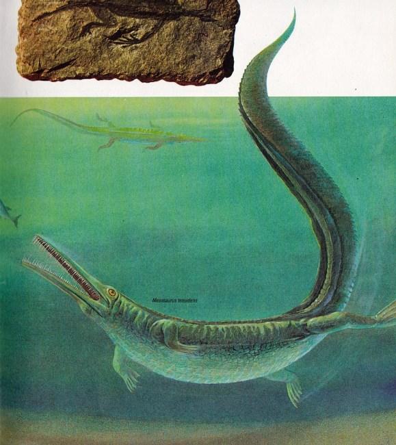 Mesosaurus by C Di Ciancio