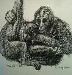 Dua orang utan (Two orangutans)