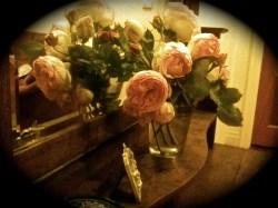 Friday roses #1