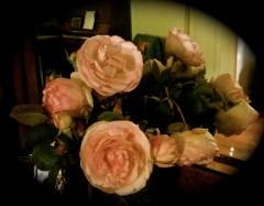 Friday roses #2