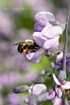 Bees Knees Photography