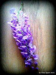 Wisteria flowerhead