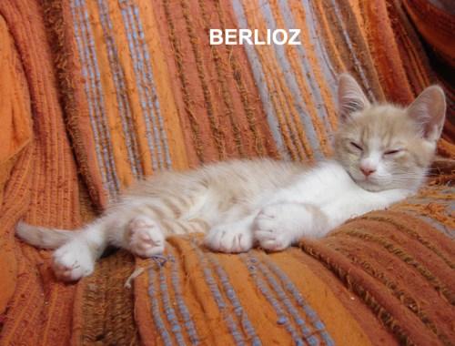 BERLIOZ-CHATON-ROUX-ADOPTIO