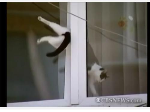 chat coincé dans une fenêtre oscillo-battante