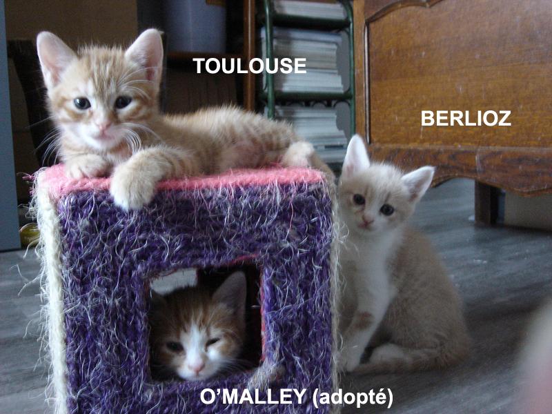 chatons roux adoption paris