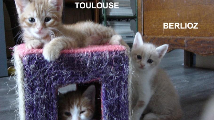 TOULOUSE & BERLIOZ Chatons roux adoptés à Paris
