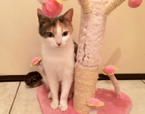 vickie-chat-adoption-ecaille