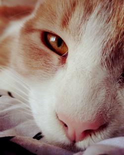 Cali adoptée chaton à 5 mois