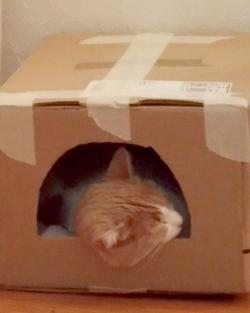 Cali qui dort dans un carton après son adoption