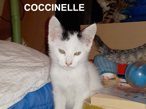 coccinelle-wp-500-01