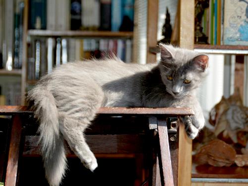 lilou-lupin-chaton-05-famille