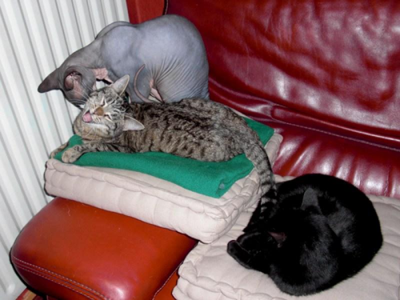 Témoignage de la famille d'adoption du chaton Gaïa & du chat Cachou