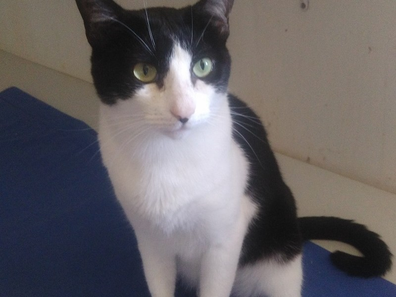 OMALLEY-chat-noir-adoption
