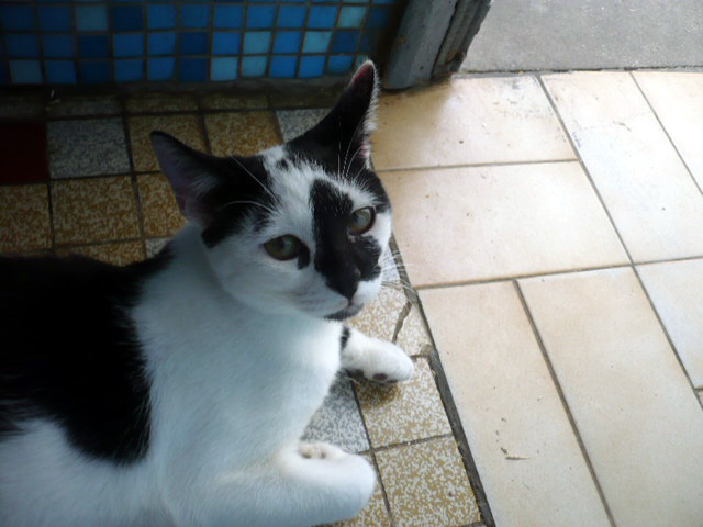 SIMBAD-adoption-chat-sos-leucose