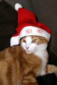 chat noel chapeau