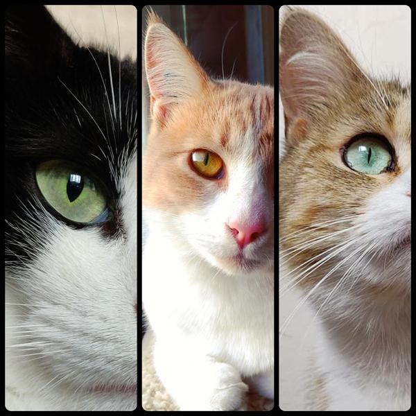 troisième chat adopté avec notre association