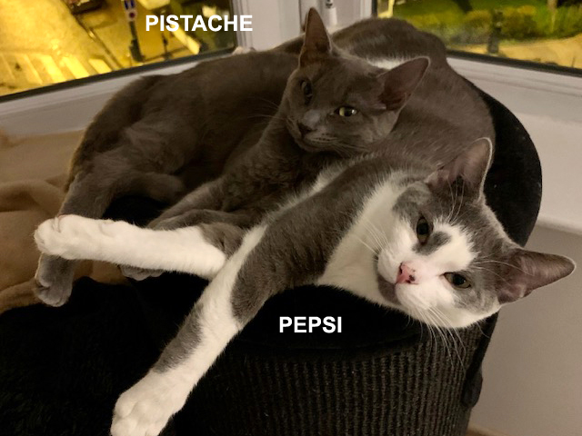 PEPSI-PISTACHE-chatons-adoption-paris-association