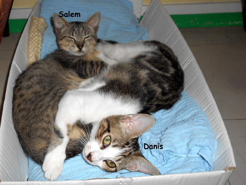 SALEM-DANIS-02
