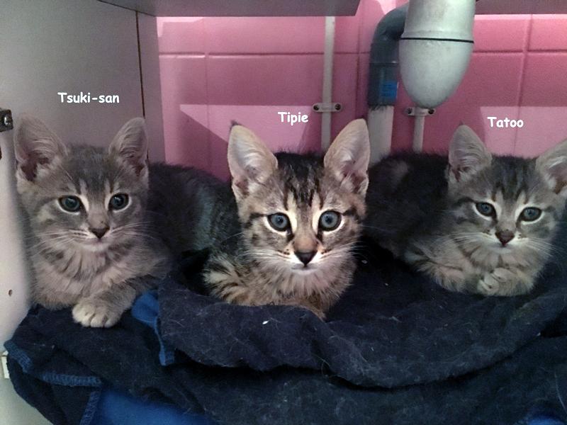 trio-chatons-02