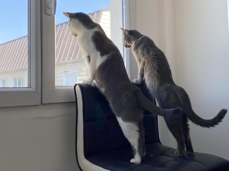 PEPSI-PISTACHE-deux-chatons-adoptes-ensemble-association