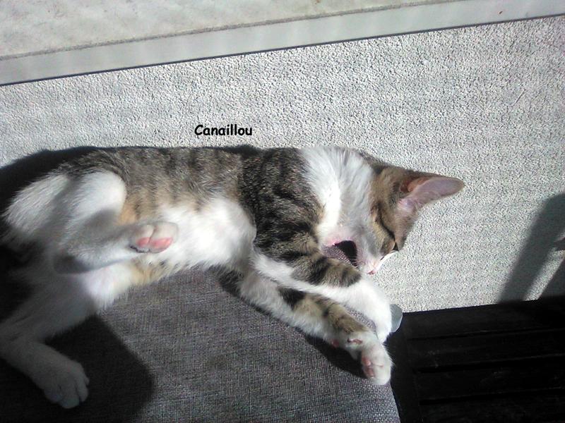 CANAILLOU-02