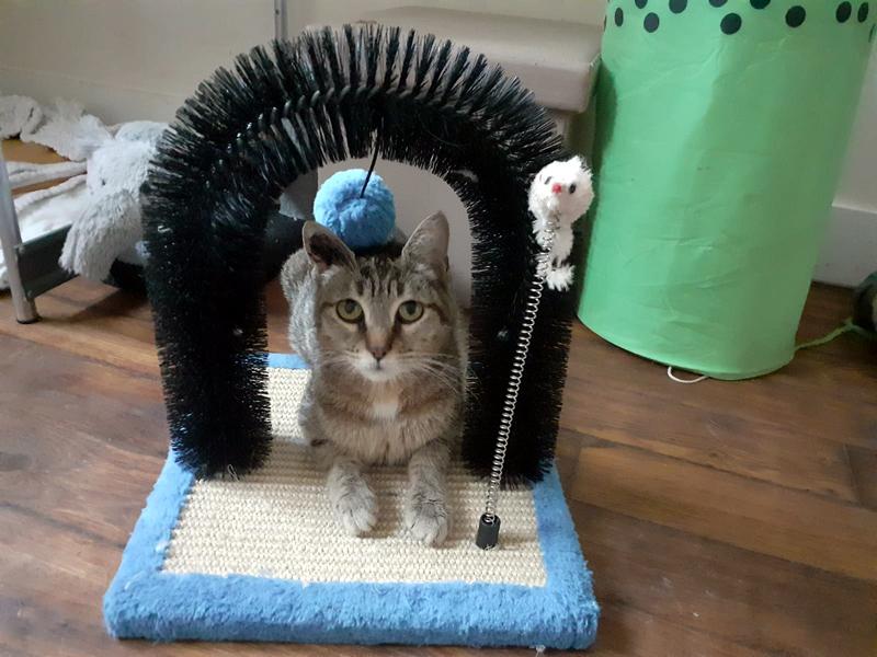 KITTY-chat-femelle-tigree-adoption-paris