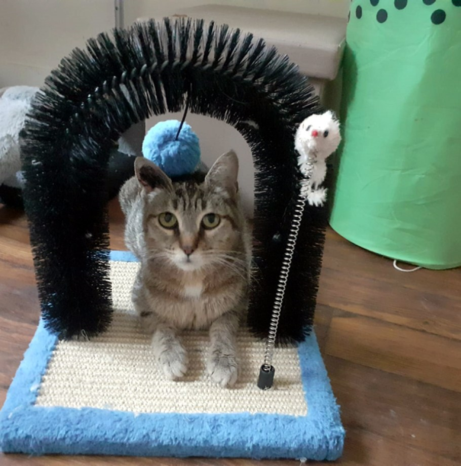 Adoption confirmée pour KITTY Chat Tigrée 1 an super câline