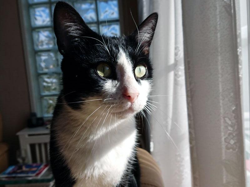 CHAUSSETTE-chat-noir-blanc-adoption-paris