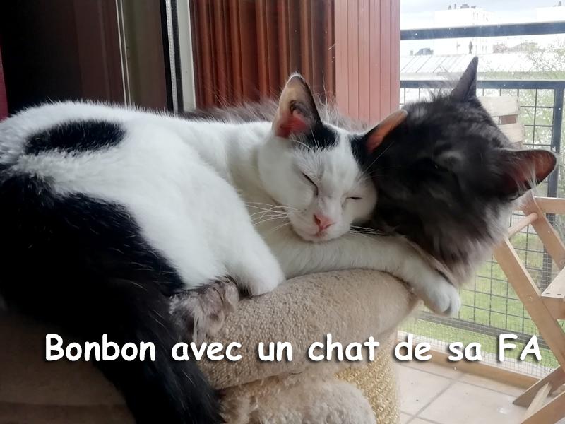 BONBON-ADOPTION-05
