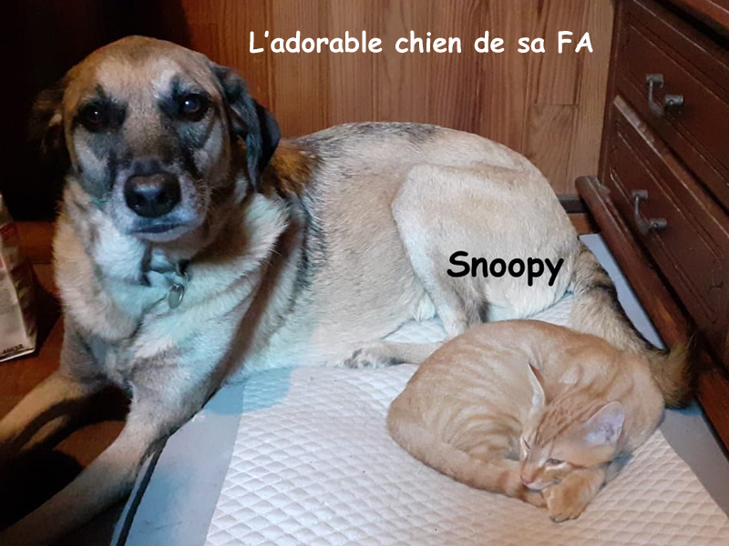 SNOOPY-03