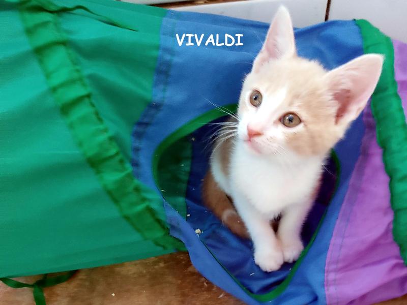 VIVALDI-01