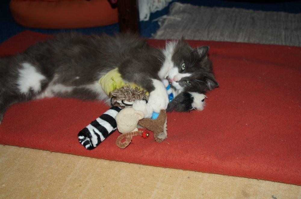 Mon chat qui se prénomme PHÉLIZ
