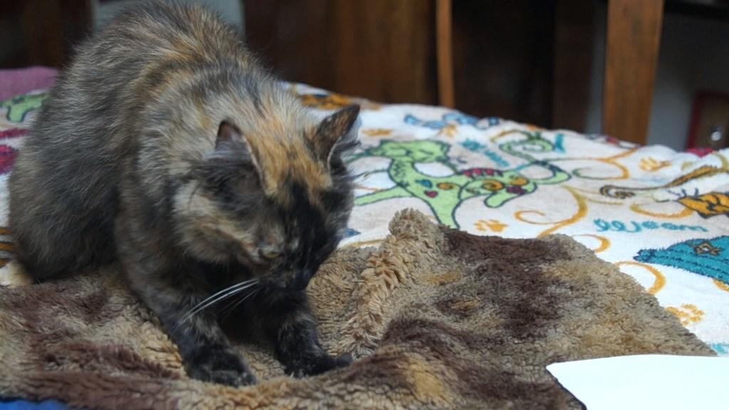 Loulette, une chatte, sur son doudou Pattacrêpe création de Gerogia
