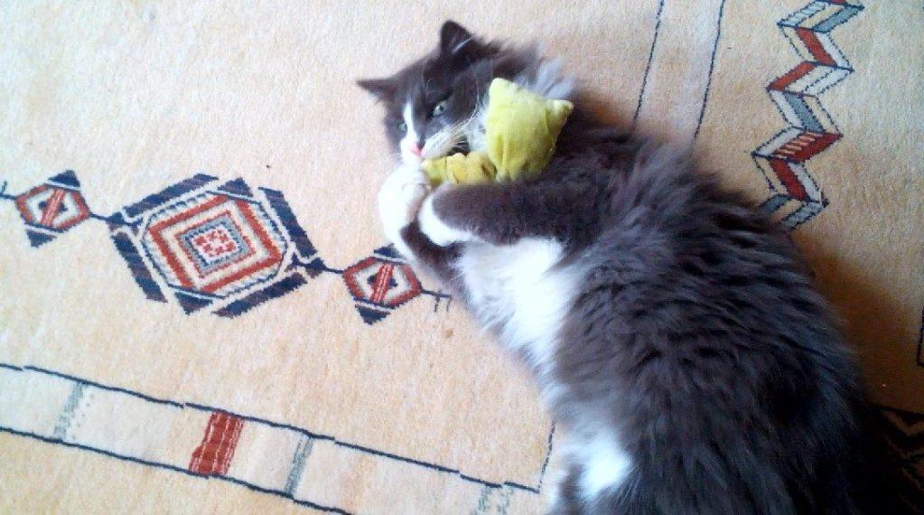 Phéliz, le chat, en train de têter un petit coussin vue 7 - création de Georgia