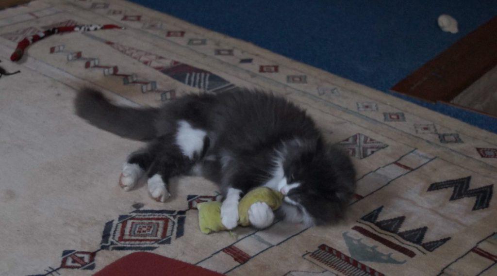 Phéliz, le chat, en train de têter un petit coussin vue 4 - création de Georgia