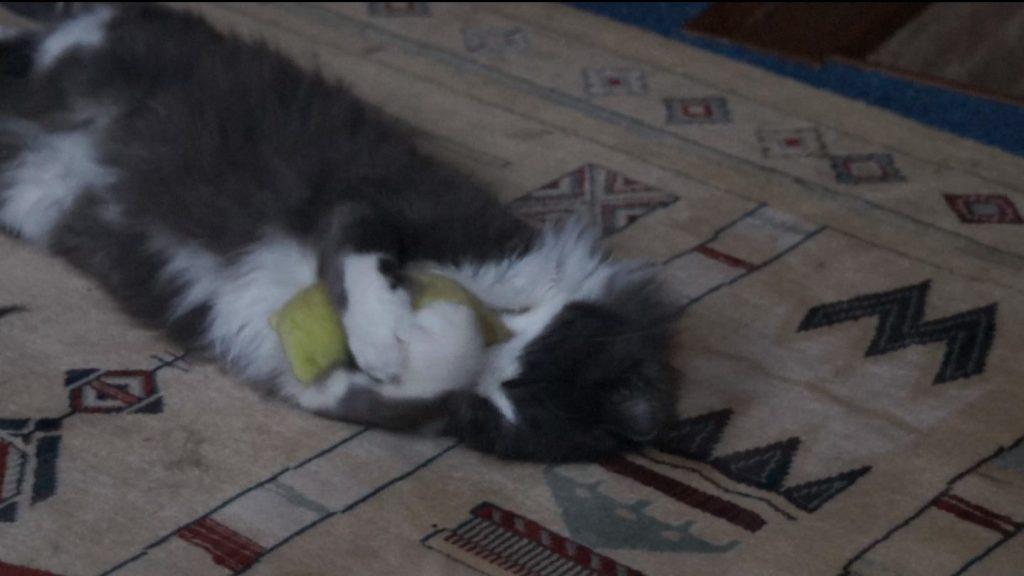 Phéliz, le chat, têtant un petit coussin vue 3 - création de Georgia