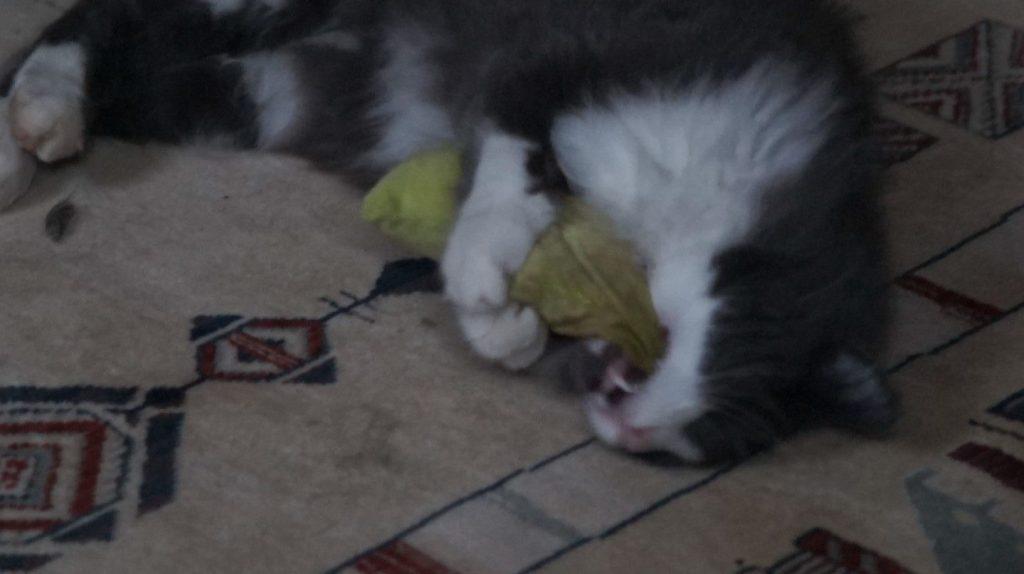 Phéliz, le chat, têtant un petit coussin vue 2 - création de Georgia
