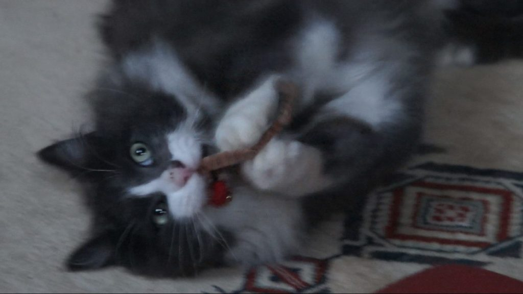 Phéliz, le chat, jouant avec un Vermi'son vue 2 - création de Gerogia