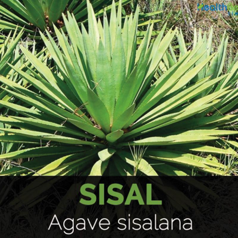 Sisal, autre photo, matière naturelle utilisée par Georgia pour fabriquer ses jouets
